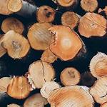 System detekcji i sygnalizacji pożaru - przemysł drzewny
